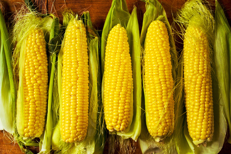 Corn, Maiz, Maize